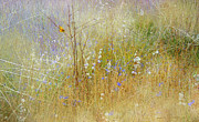 R christopher Vest - Colorado Summer Meadow...