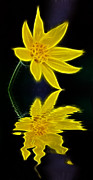 Reflecting Water Mixed Media Prints - Colorado Wildflower Print by Shane Bechler