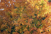 Laura Watts Photo Metal Prints - Colorful Autumn Metal Print by Laura Watts