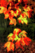 Fall Colors Autumn Colors Posters - Colorful Autumn Leaves II - Blue Ridge Poster by Dan Carmichael