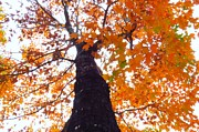 Photos Of Autumn Photos - Colorful Canopy by Scott Cameron