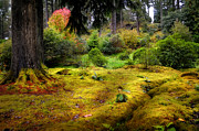 Barks Prints - Colorful Carpet of Moss in Benmore Botanical Garden Print by Jenny Rainbow
