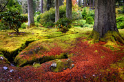 Barks Framed Prints - Colorful Carpet of Moss in Benmore Botanical Garden. Scotland Framed Print by Jenny Rainbow