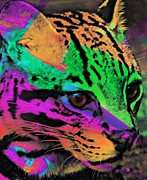 Kathleen Struckle - Colorful Cat