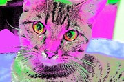 Puppies Digital Art - Colorful Cat by Kathy Budd