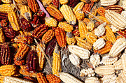 Corns Prints - Colorful Corn Cobs Print by James Brunker