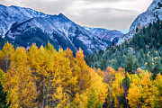 Colorful Crested Butte Colorado Print by James BO  Insogna
