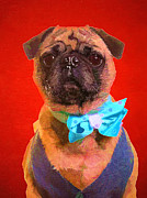 Pet Photo Prints - Colorful Dapper Pug Print by Edward Fielding