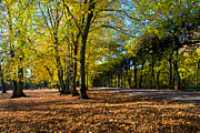 Fall Grass Prints - Colorful fall autumn park Print by Michal Bednarek