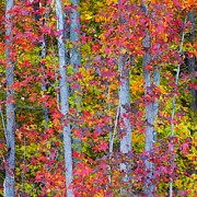Turning Leaves Prints - Colorful Fall Leaves Print by Scott Cameron