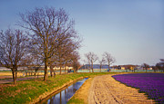 Reflections In Water Prints - Colorful Fields of Holland Print by Jenny Rainbow