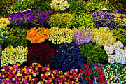 Colour Art - Colorful flowers background by Photocreo Michal Bednarek