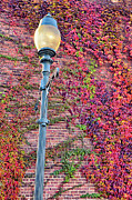 Triad Prints - Colorful Ivy and Lamppost I Print by Dan Carmichael