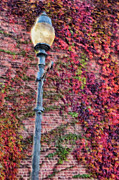 Triad Prints - Colorful Ivy and Lamppost II Print by Dan Carmichael