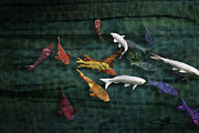 Success Mixed Media - Colorful Koi Meditation Mixed Media by Modern Artist by Jani Bryson