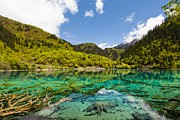 Turquoise Mountain Lake Prints - Colorful Lake at Jiuzhaigou China Print by Fototrav Print