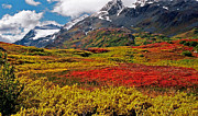 Bunt Framed Prints - Colorful Land - Alaska Framed Print by Juergen Weiss