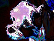 Maltese Dog Photos - Colorful Maltese by Annie Zeno