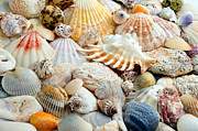 Sea Shell Digital Art Posters - Colorful Ocean Seashells 2 Poster by Andee Photography