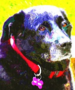 Soulful Eyes Digital Art - Colorful Old Dog by Barbara Griffin