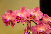 Wayne Stabnaw - Colorful Orchid