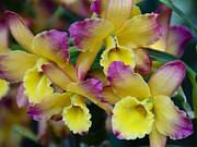 Penny Lisowski - Colorful Orchids