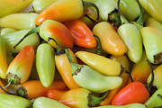 Colorful Peppers Print by James BO  Insogna