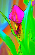 Bonnie Willis - Colorful Pink Calla Lily