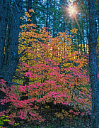Oak Creek Photo Originals - Colorful Rays by Brian Lambert