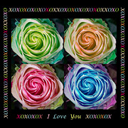 Colorful Rose Spirals With Love Print by James BO  Insogna
