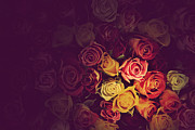 Romance Art - Colorful roses background by Michal Bednarek