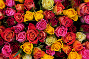 Anniversary Art - Colorful roses background by Photocreo Michal Bednarek