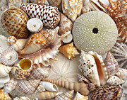 Beach Combing Posters - Colorful Seashell Variety Poster by Jennie Marie Schell