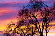Stock Images Prints - Colorful Silhouetted Trees 25 Print by James Bo Insogna