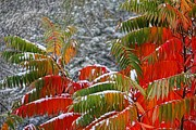 Winter Storm Photos - Colorful Snow by Mariola Bitner