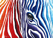 Zebra Face Prints - Colorful Stripes Original Zebra Painting by MADART Print by Megan Duncanson