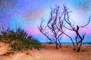 Oats Prints - Colorful Sunrise Hatteras Outer Banks III Print by Dan Carmichael