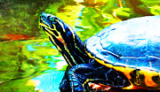 Sharon Cummings Posters - Colorful Turtle by Sharon Cummings Poster by Sharon Cummings