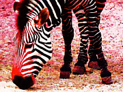 Zebras Posters - Colorful Zebra - Buy Black And White Stripes Art Poster by Sharon Cummings