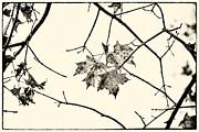 Karol  Livote - Colorless Autumn
