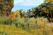 Colors Along The Gunnison Print by Bob Hislop