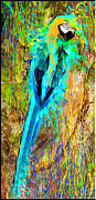 Coloured Plumage Framed Prints - Colors Ara Framed Print by Daniel Janda