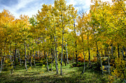 Fort Collins Art - Colors Colorado by Keith Ducker