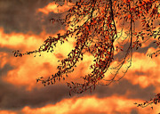 Abstract Nature Prints - Colors of Autumn Print by Bob Orsillo