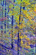 Colors Of Autumn Print by Deena Stoddard