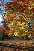 Fall Photos Prints - Colors of Autumn  Print by Neal  Eslinger