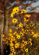 Sabrina L Ryan - Colors of Autumn