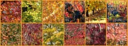 Colors Of Autumn Photo Posters - Colors of Fall Collage Poster by Carol Groenen