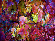 Janice Westerberg - Colors Of Fall