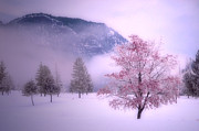 Tara Turner - Colour Admist the Snow...